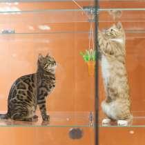 Открой гостиницу для животных вместе с BookingCat, в Ижевске