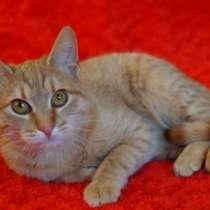 Отдам даром Макс, чудесный рыженький котенок в дар, в г.Москва