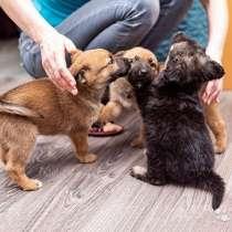 Крошки-щенки, два мальчика и девочка в добрые руки, в г.Москва