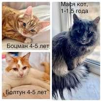 Домашние котики и кошечки, потерявшие хозяйку, ищут дом, в г.Москва