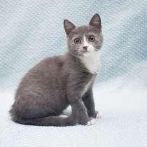 Плюшевое мурчащее счастье, милый котенок Сема ищет дом, в г.Москва