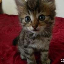 Котята в добрые руки, в Батайске