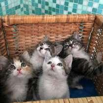 Очаровательные крохи-котята,мальчики и девочки в добрые руки, в г.Москва