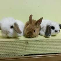 Крольчата-милашки, в Чебоксарах