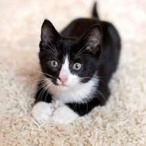 Очаровательные домашние котята-малыши в добрые руки, в г.Москва