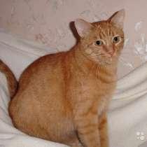 Роскошный котик Рыжик в добрые руки, в г.Москва