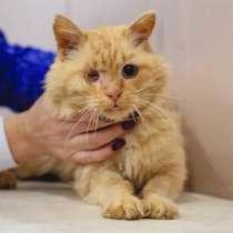 Рыжее солнышко Лева, молодой особенный котик ищет дом, в г.Москва