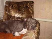 Срочно продам недорого собаку!!!!, в Воронеже