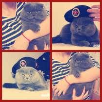 Вязка с котом, в Махачкале