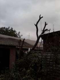 Валка деревьев, кронирование, чистка участков, в Ростове-на-Дону