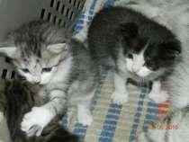 Эти котята ВАШИ!, в Кургане