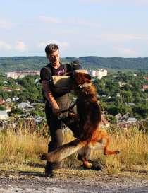 Дресировка собак, в Пензе