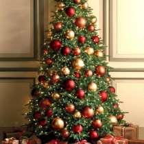 Живые сосны, ёлки и пихты оптом к Новому году, в Уфе