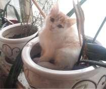 Отдам ласкового, доброго, бело-рыжего, 2-х месячного котика, в Москве