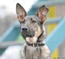 Антикризисная собака, в Москве