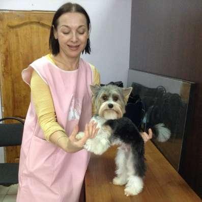 Стрижка и уход за декоративными собаками
