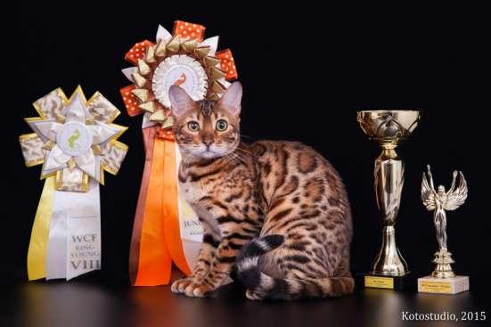 Бенгальские котята из профессионального питомника OutletGold в Казани Фото 1