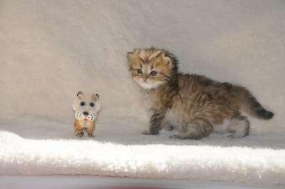 Удивительные котята в г. Тимашевск Фото 1