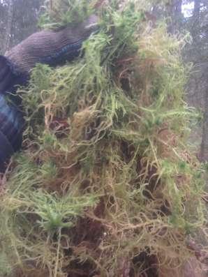 Строительный мох сфагнум