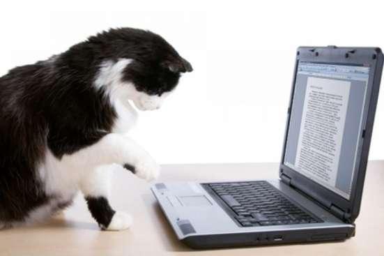 Перепечатка текстов, курсовых, дипломов