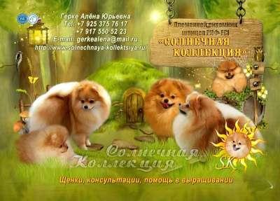 Продаются щенки цвргшпица померанского ш