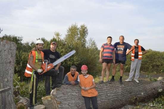 Спилить, удалить дерево в Раменске, Раменском районе