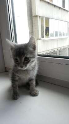 Дарим котят, симпатичные, чистоплотные, самостоятельные в Иркутске Фото 2