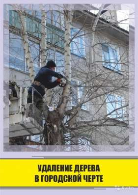 Удаление деревьев любой сложности в Воронеже Фото 2