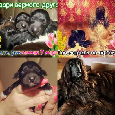 ЩЕНКИ АФГАНСКОЙ БОРЗОЙ
