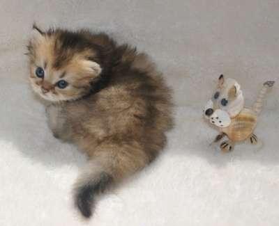 Удивительные котята в г. Тимашевск Фото 5