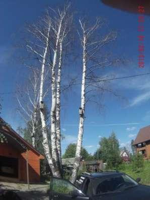 Спил, удаление деревьев в Раменском, Раменском районе