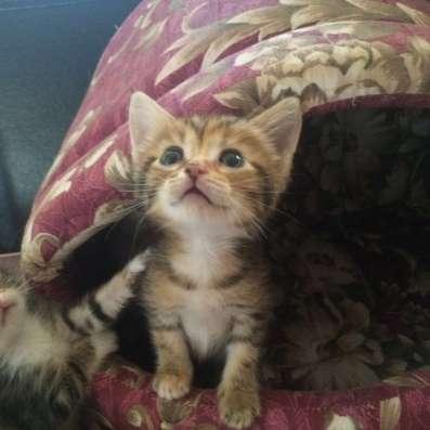 Милые котята даром в Краснодаре Фото 2